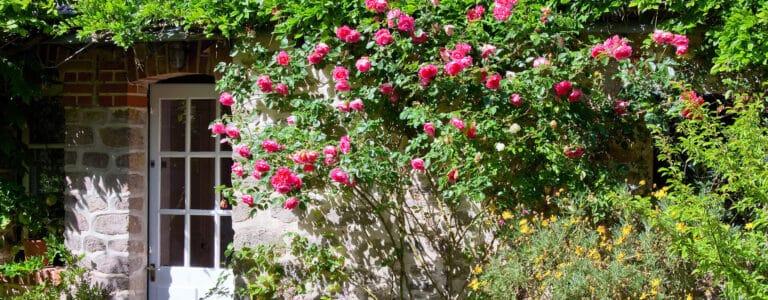 Fassadenbrünung mit Rosen