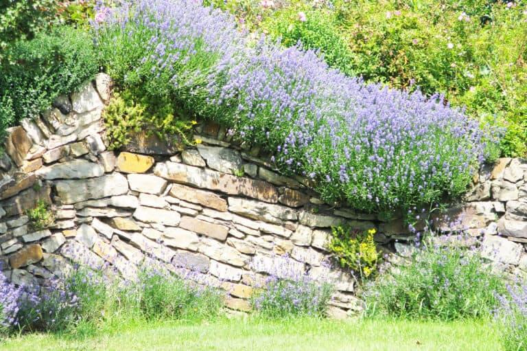 Quarzsandstein hell als Mauer mit Bepflanzung
